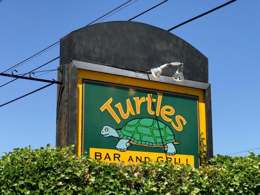 Turtles_34