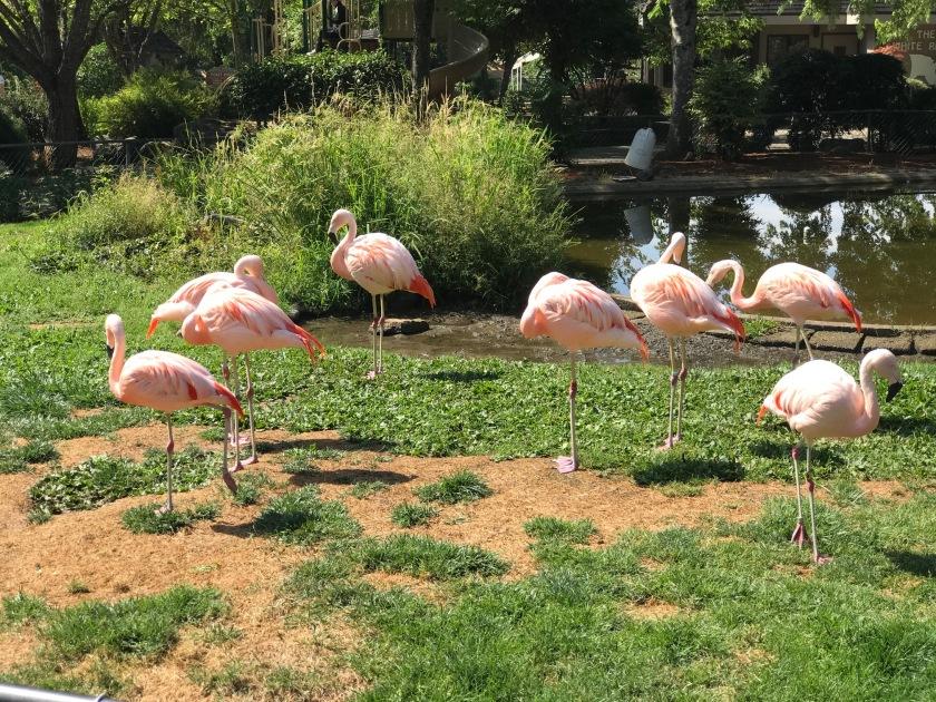 Flamingoes exhibit
